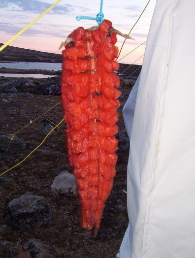 Arctic char prepared to dry in the Inuit method in Nunavut, Canada
