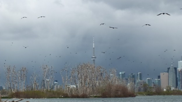black storm clouds - toronto - ontario - may 12 2013