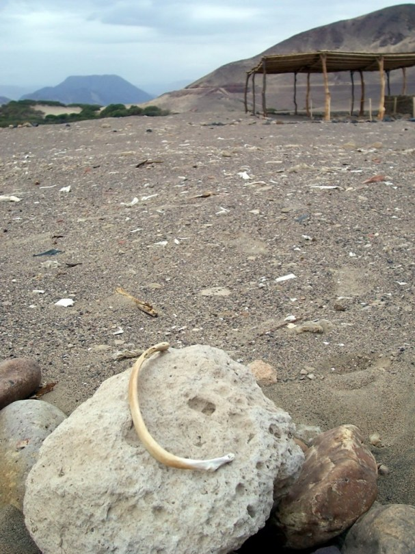 A bone sitting on rock at the Chauhilla Cemetery near Nazca in Peru, South America.