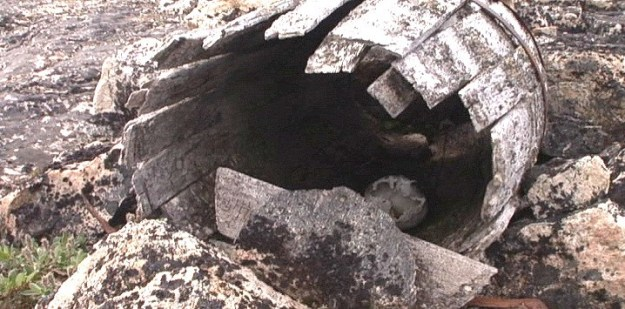 human skull inside a coffin barrel on kekerten island - nunavut