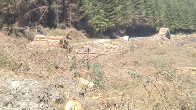 logging piles along the wicklow way hiking trail - wicklow mountains - ireland