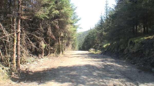 logging road along the wicklow way hiking trail - wicklow mountains - ireland