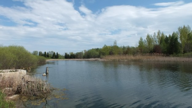 milliken park pond - toronto - ontario