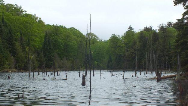swamp near oxtongue lake - ontario - canada