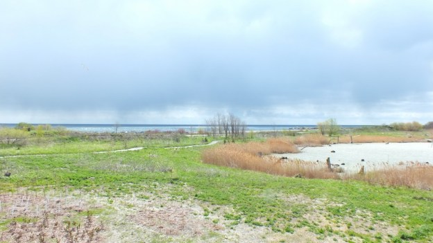 tommy thompson park - looking towards lake ontario - Toronto - Ontario
