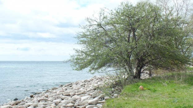 tommy thompson park - looking towards lake ontario --- Toronto - Ontario