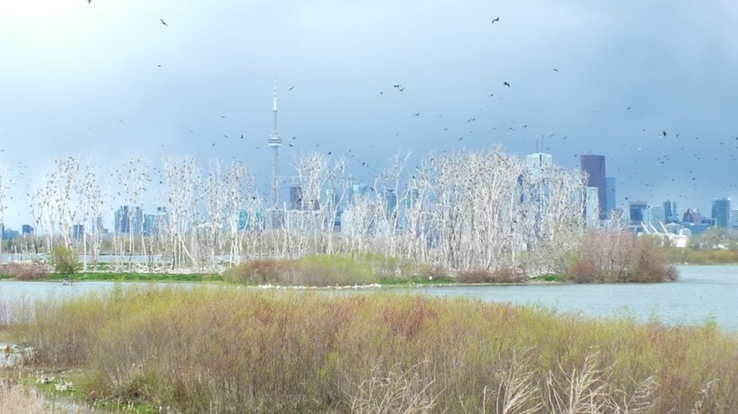 Toronto skyline viewed from Tommy Thompson Park, in Toronto, Ontario, Canada.