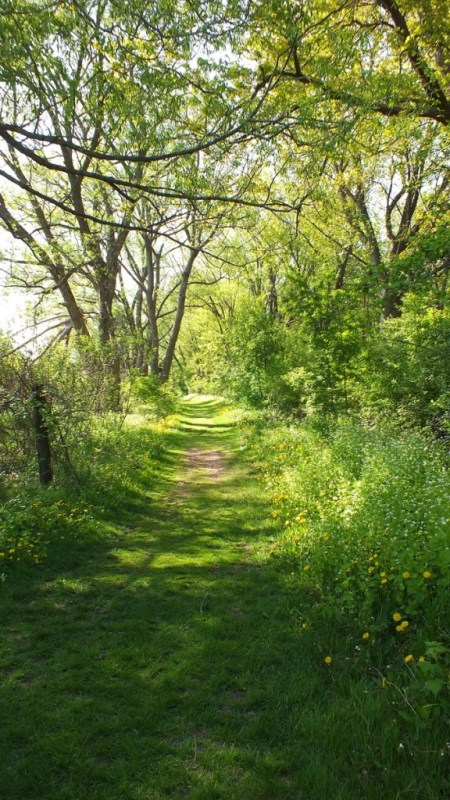Afternoon sunshine - Cool Hollow Trail - Second Marsh - Oshawa - Ontario