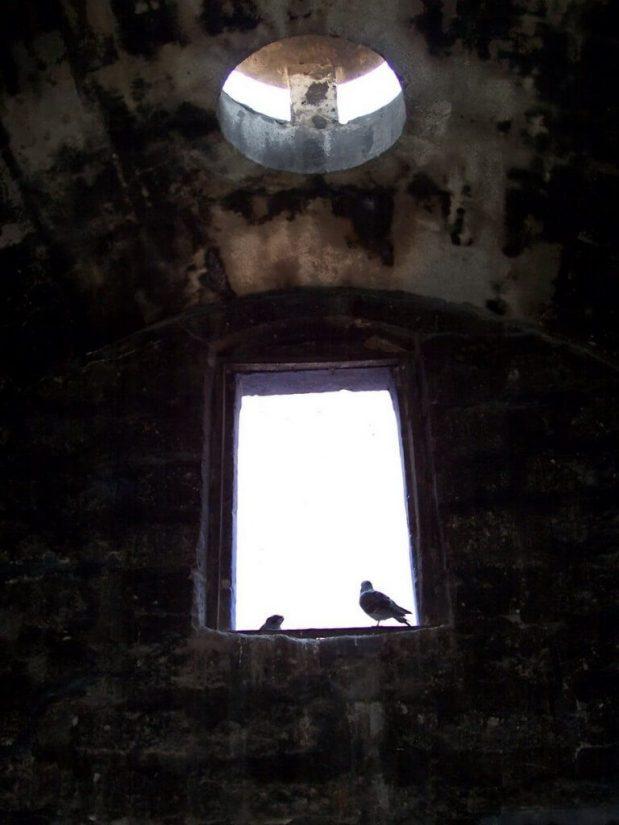 Birds at Santa Catalina Monastery, Arequipa, Peru