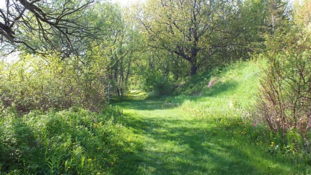 Cool Hollow Trail - Second Marsh - Oshawa - Ontario