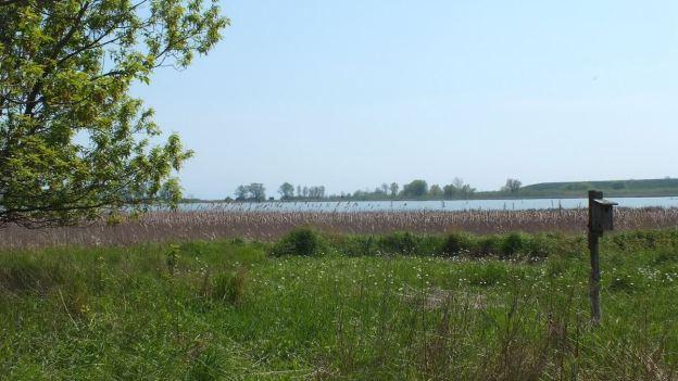 Second Marsh - Oshawa - Ontario