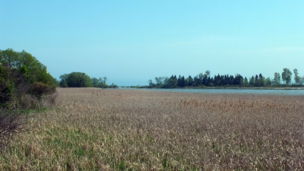 Second Marsh - looking towards Lake Ontario - Oshawa - Ontario