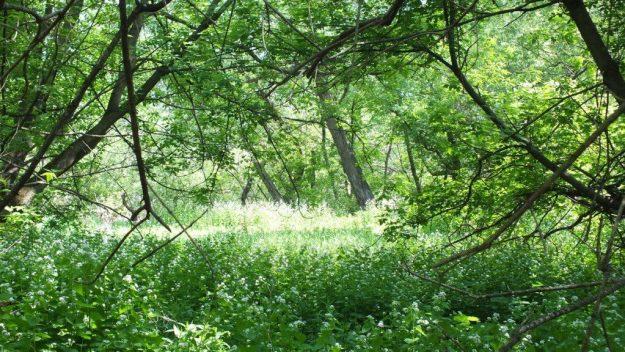 Shady Glen - Second Marsh - Oshawa - Ontario