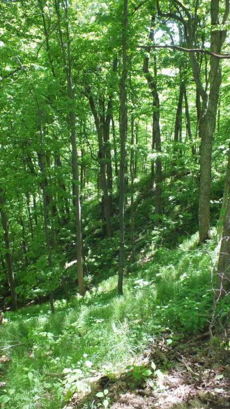 forest of trees - forks of the credit provincial park - caledon - ontario