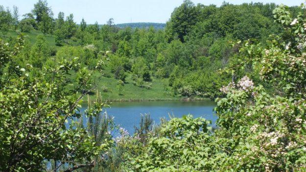 green hillside above kettle lake - forks of the credit provincial park - ontario