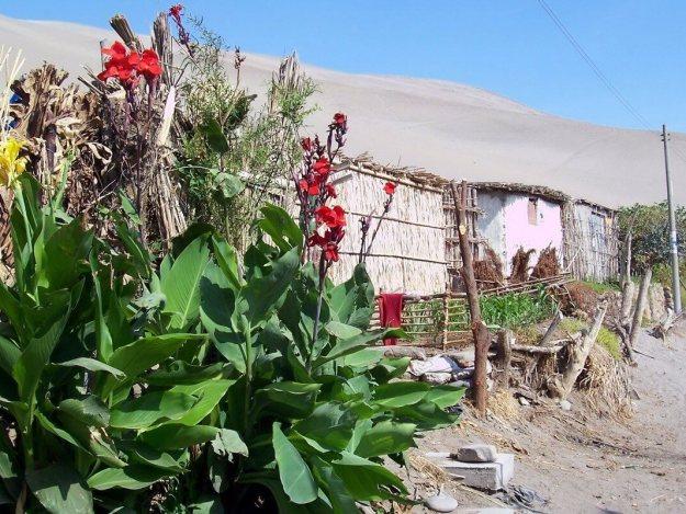 huts in sand dune village - camana - peru