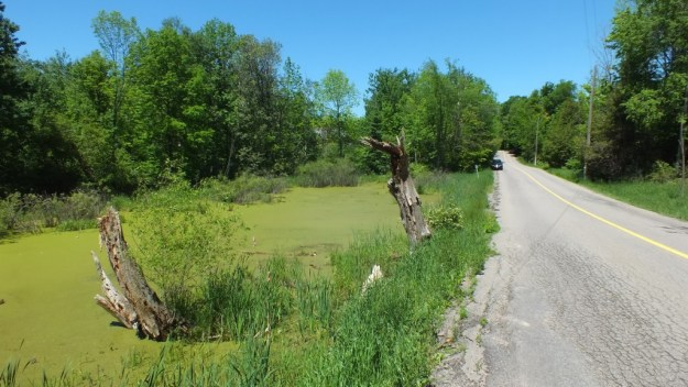 pond along roadway where painted turtles live - ontario