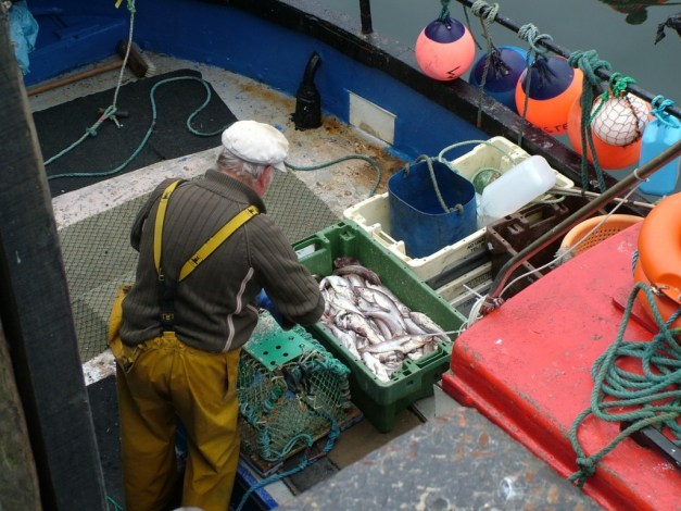 fisherman prepares lobster trap in dunmore east harbour in county waterford - ireland