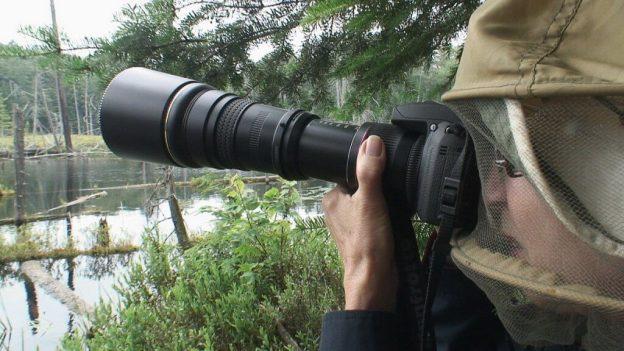 Jean, Great Blue Heron rookery, oxtongue lake