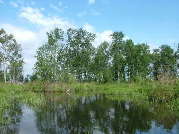 canoe route in the minesing swamp, ontario