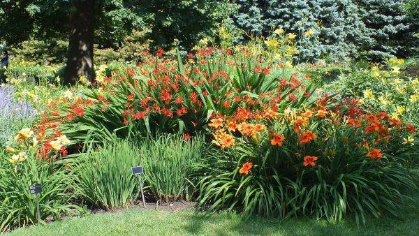 daylilies galore - Montreal Botanical Garden - Frame To Frame Bob & Jean