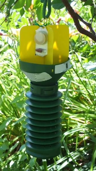 pheromone trap for japanese beetles - Montreal Botanical Garden - Frame To Frame Bob & Jean