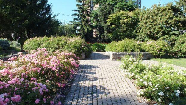 Rosetta McClain Gardens - formal rose garden - Toronto