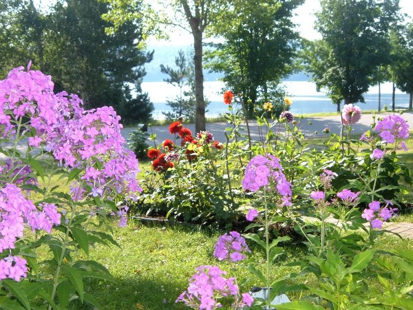 flower garden at oxtongue lake - ontario - frame to frame bob & jean