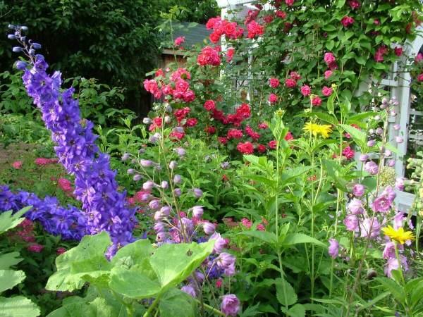 flowers growing in jeans garden, toronto, ontario