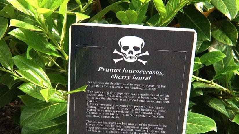 Cherry laurel sign in the Poison Garden at Blarney Castle in County Cork, Ireland
