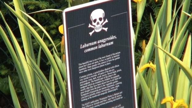Common laburnum plant sign in the Poison Garden at Blarney Castle in County Cork, Ireland