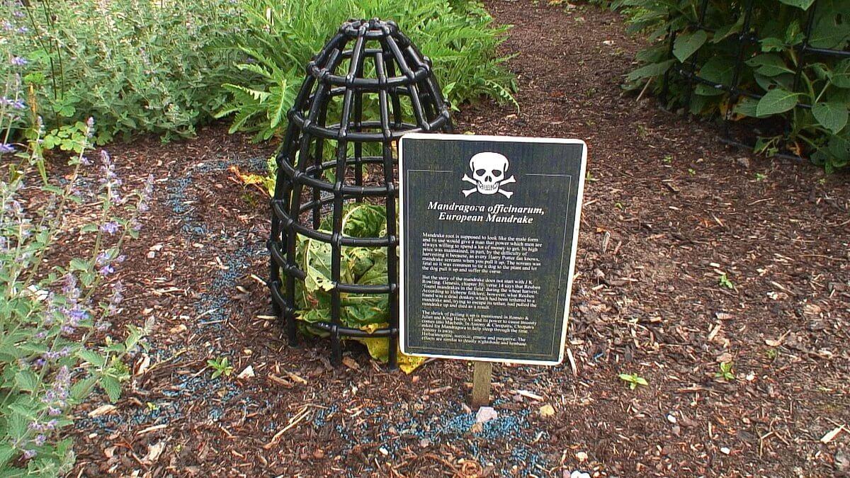 The Poison Garden At Blarney Castle In Ireland