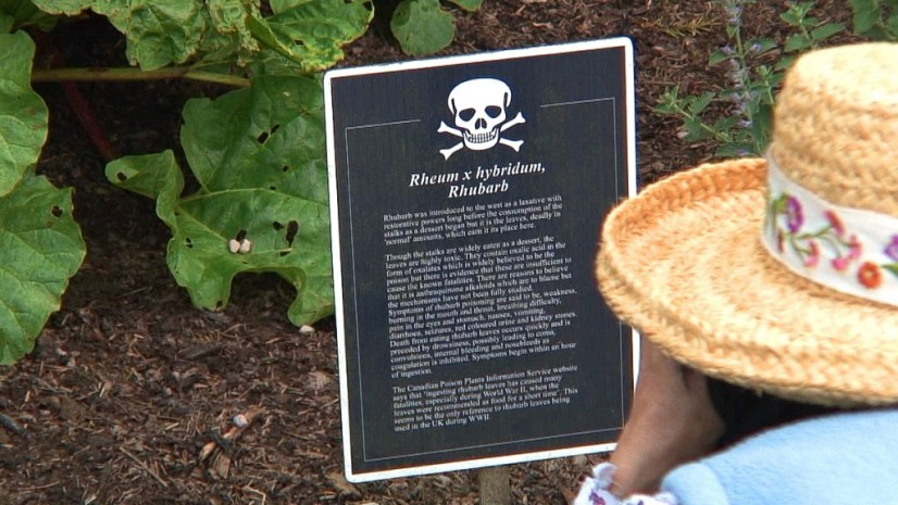 Jean takes a photograph of the Rhubarb sign in the Poison Garden at Blarney Castle in County Cork, Ireland