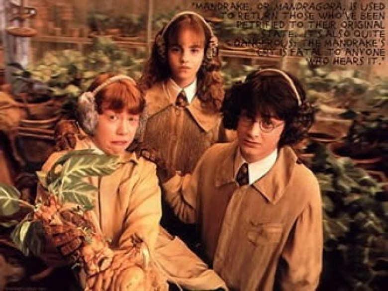 mandrake being held in harry potter movie
