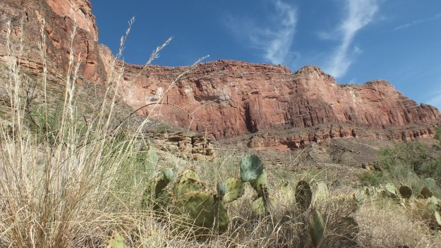 cactus on bright angel trail 21a
