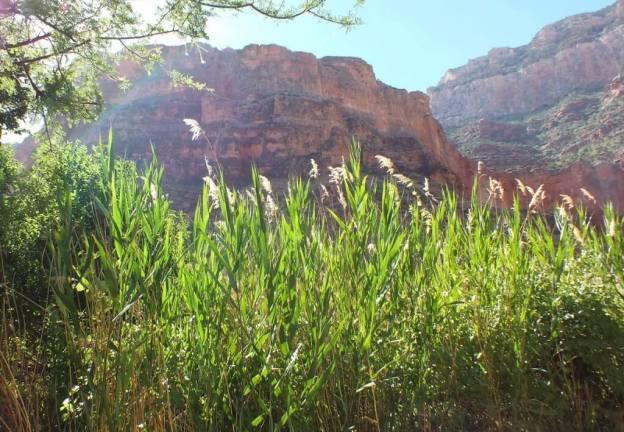 grass growing at indian garden 35