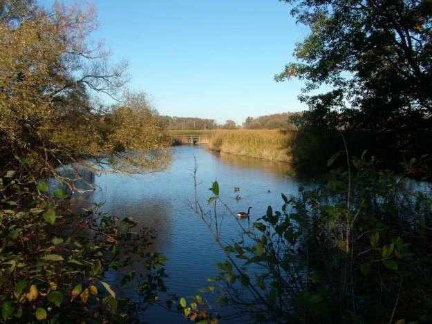 view of swamp-Lynde shores conservation