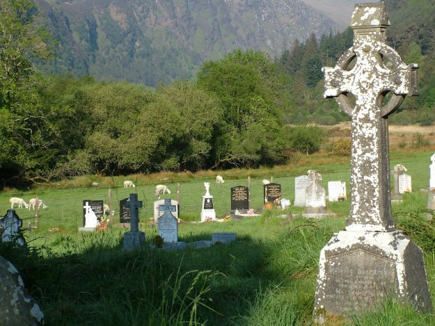 Sheep in a field beside Glendalough graveyard - Ireland