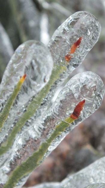 ice storm toronto 2013 - pic14