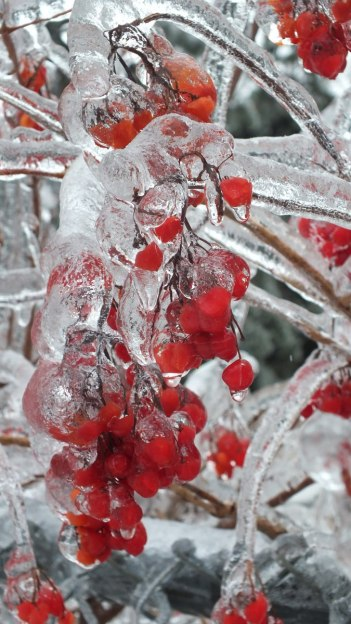 ice storm toronto 2013 - pic17