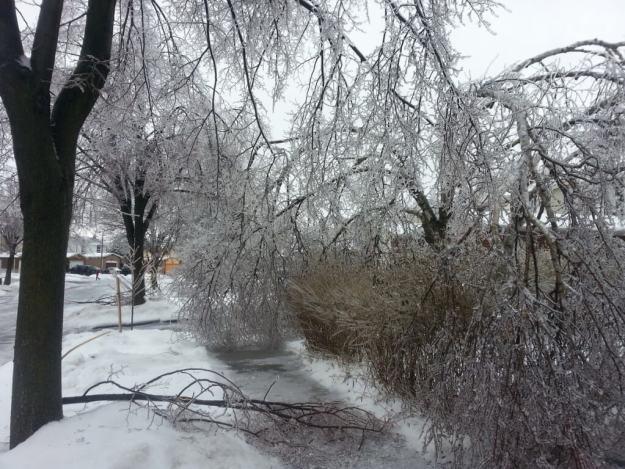 ice storm toronto 2013 - pic2