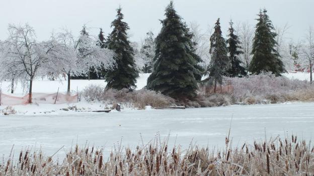 ice storm toronto 2013 - pic22