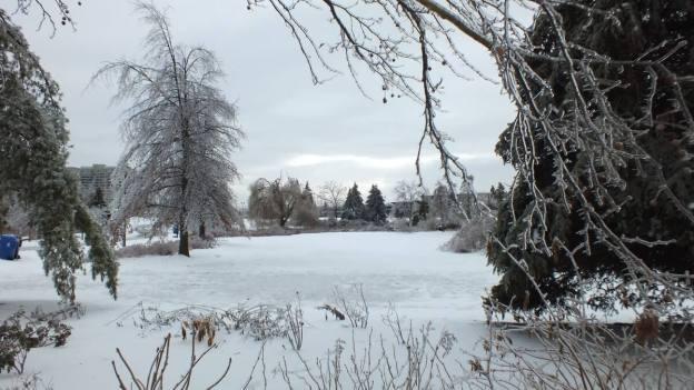 ice storm toronto 2013 - pic29