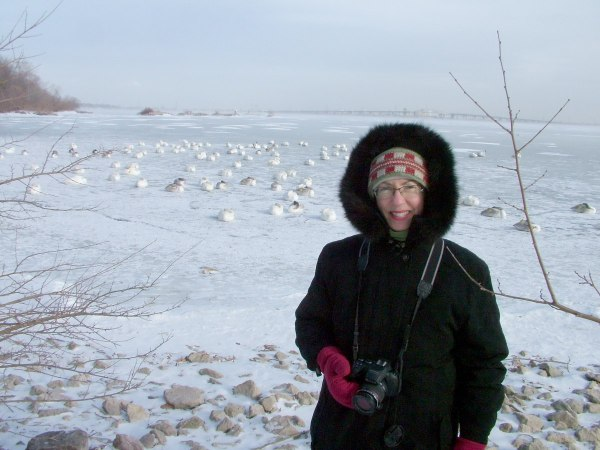 jean with trumpeter swans at la salle park - burlington