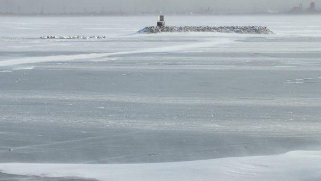 trumpeter swans near island on ice - la salle park - burlington - ontario 3
