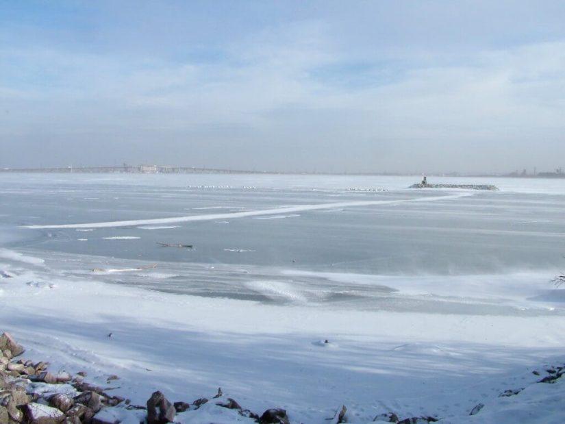 trumpeter swans on ice near burlington - ontario