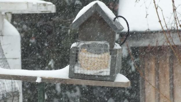 Suet feeder lost in snowstorm in Toronto