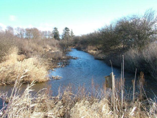 marshland at reifel bird sanctuary