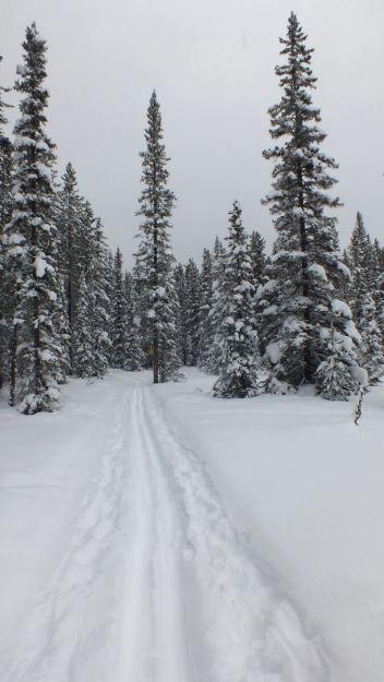 pipestone ski trail winter - banff national park 4