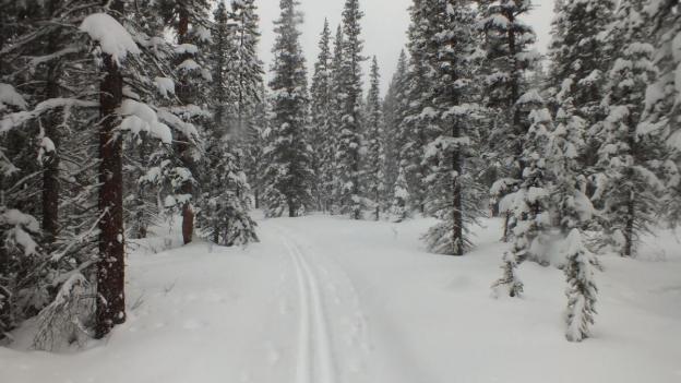 pipestone ski trail winter - banff national park